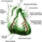 Calea neprilysinei în insuficiența cardiacă: o revizuire și ghid privind utilizarea sacubitrilului / valsartanului